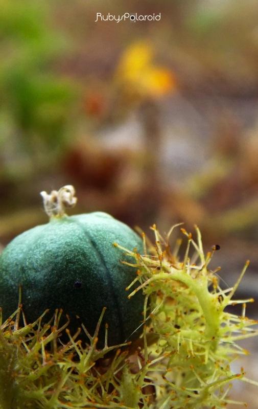 New Growth by rubys polaroid