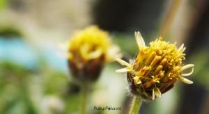 wild flower macro 3 by rubys polaroid